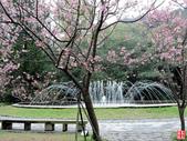 2017竹子湖海芋季:2017竹子湖海芋季 (8).jpg