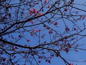 紅淡山蝙蝠洞:紅淡山 (67).jpg