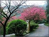 耳空龜山:天道院櫻花.jpg