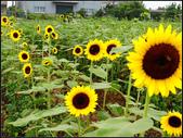 2013向陽農場初夏:向陽農場 (18).jpg