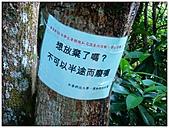 南港山縱走:南港山縱走 (10).jpg