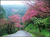 耳空龜山:天道院櫻花 (2).jpg