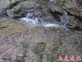大熊櫻花林:大熊櫻花林 (18).jpg