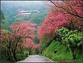 耳空龜山:天道院櫻花 (3).jpg