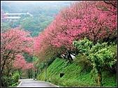 耳空龜山:天道院櫻花 (4).jpg