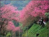 耳空龜山:天道院櫻花 (5).jpg