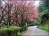 耳空龜山:天道院櫻花 (6).jpg
