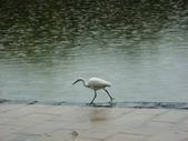 大湖公園白鷺鷥山:大湖公園白鷺鷥山 (11).jpg