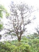 福山阿玉林道:福山阿玉林道 (9).jpg