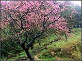 耳空龜山:天道院櫻花 (9).jpg
