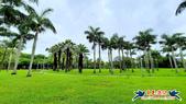 大安森林公園~黃金雨:大安森林公園~黃金雨 (11).jpg