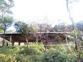 紅淡山蝙蝠洞:紅淡山 (74).jpg