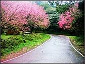 耳空龜山:天道院櫻花 (14).jpg