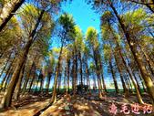 桃園八德落羽松森林:桃園八德落羽松森林 (5).jpg