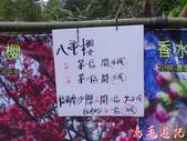 大熊櫻花林:大熊櫻花林 (3).jpg