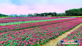 古亭河濱公園·六色香堇菜地毯花海:古亭河濱公園·六色香堇菜地毯花海 (2).jpg