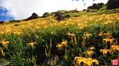 六十石山金針花、羅山大魚池、泥火山:六十石山金針花、羅山大魚池、泥火山 (3).jpg