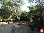 羊稠坑森林步道:羊稠坑森林步道 (8).jpg