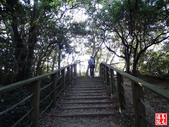 羊稠坑森林步道:羊稠坑森林步道 (10).jpg