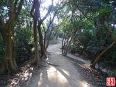 羊稠坑森林步道:羊稠坑森林步道 (19).jpg