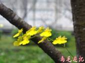 汐止康誥坑溪畔櫻花初開:汐止康誥坑溪畔櫻花初開 (11).jpg