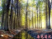 桃園八德落羽松森林:桃園八德落羽松森林 (12).jpg