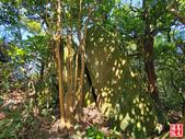 蚊子坑古道、和美池、和美山、苦命嶺、苦苓嶺、南雅山下南雅奇岩:蚊子坑古道、和美池、和美山、苦命嶺、苦苓嶺、南雅山下南雅奇岩 (80).jpg
