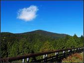 太平山山毛櫸鐵杉林:太平山山毛櫸鐵杉林 (3).jpg