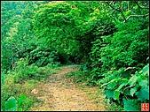 猴洞坑溪步道:猴洞溪步道 (5).jpg