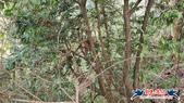 大坑頭嵙山步道(4上3下O形):大坑頭嵙山步道(4上3下O形) (60).jpg
