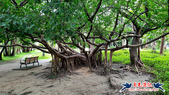 大安森林公園~黃金雨:大安森林公園~黃金雨 (21).jpg