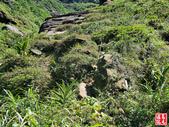 蚊子坑古道、和美池、和美山、苦命嶺、苦苓嶺、南雅山下南雅奇岩:蚊子坑古道、和美池、和美山、苦命嶺、苦苓嶺、南雅山下南雅奇岩 (120).jpg