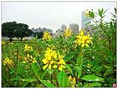 新北大橋&幸福水漾公園:新北大橋&幸福水漾公園 (34).jpg