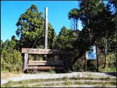 太平山山毛櫸鐵杉林:太平山山毛櫸鐵杉林 (1).jpg