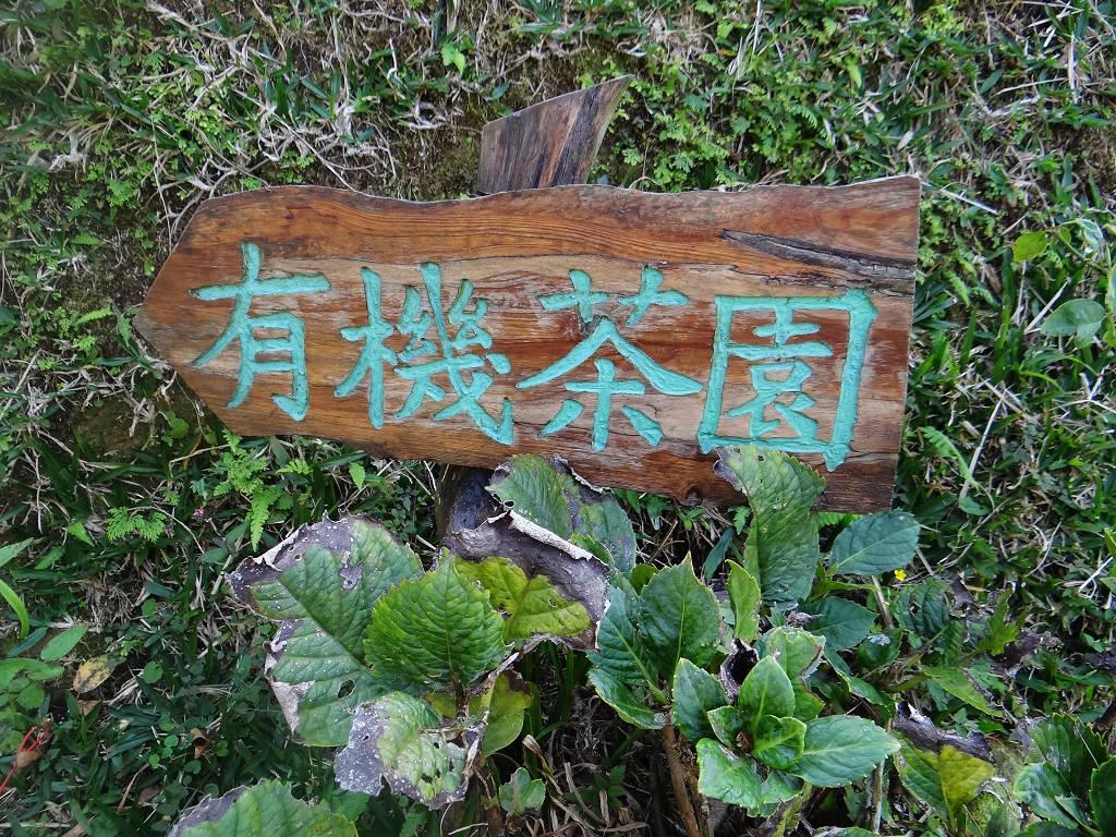 熊空竹坑山:熊空山竹坑山 (23).jpg