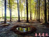 桃園八德落羽松森林:桃園八德落羽松森林 (19).jpg