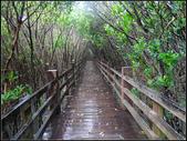 紅樹林步道:紅樹林步道 (21).jpg