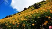 六十石山金針花、羅山大魚池、泥火山:六十石山金針花、羅山大魚池、泥火山 (2).jpg
