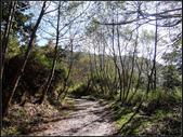 太平山山毛櫸鐵杉林:太平山山毛櫸鐵杉林 (10).jpg