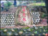 貓空杏花林石龜:貓空杏花林石龜 (3).jpg