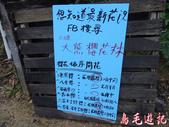 大熊櫻花林:大熊櫻花林 (5).jpg
