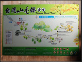 太平山山毛櫸鐵杉林:太平山山毛櫸鐵杉林 (11).jpg