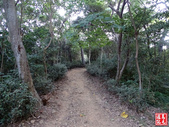 羊稠坑森林步道:羊稠坑森林步道 (2).jpg