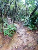 大湖公園白鷺鷥山:大湖公園白鷺鷥山 (30).jpg