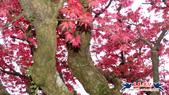 竹子湖-水尾巴拉卡步道-大屯山-二子坪:竹子湖-水尾巴拉卡步道-大屯山-二子坪 (10).jpg