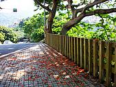 天母古道水管路步道:天母古道水管路 (3).jpg