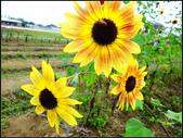 2013向陽農場初夏:向陽農場 (3).jpg