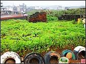 綠色礁岩海岸:老梅綠色礁岩海岸 (4).jpg