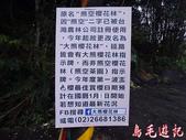 大熊櫻花林:大熊櫻花林 (1).jpg