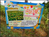 2013向陽農場初夏:向陽農場 (5).jpg